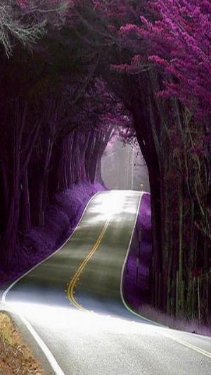 Beautiful Road.jpg Nature
